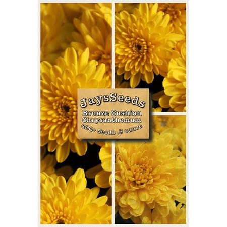 - Bronze Cushion Mum - Chrysanthemum Seeds 1/2 Ounce