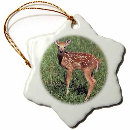 3dRose White-tailed deer fawn - NA02 AJE0321 - Adam Jones - Snowflake Ornament, (Deer Snowflake)