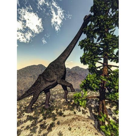 Brachiosaurus dinosaur grazing on a Wollemia pine tree Canvas Art - Elena DuvernayStocktrek Images (25 x 33) ()