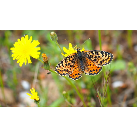 Laminated Poster Flower Macro Butterfly Nature Poster Print 24 x 36