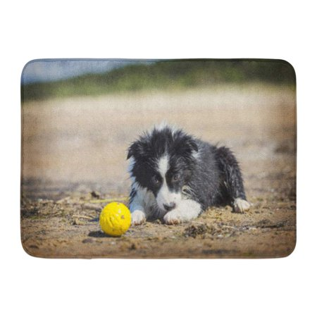 GODPOK Red Animal Blue Action Border Collie Puppy Plays in The Beach Green Activity Canine Rug Doormat Bath Mat 23.6x15.7 - Blue Border Collie