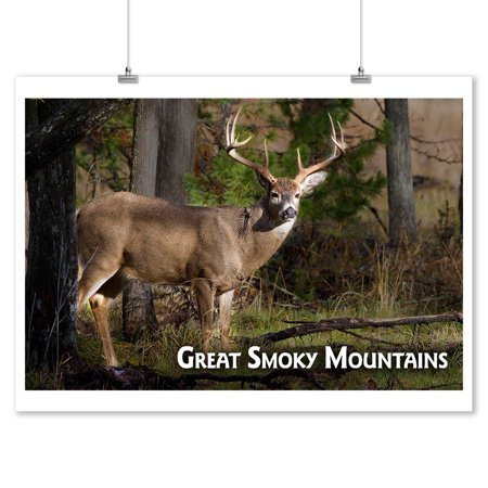 Great Smoky Mountains, Tennessee - White-tailed Deer Buck - Lantern Press Photography (9x12 Art Print, Wall Decor Travel Poster)