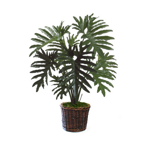 Dalmarko Designs Philodendron Floor Plant in Basket