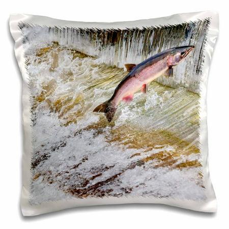 3dRose Salmon jumping up a fish ladder. Issaquah Hatchery, Washington - Pillow Case, 16 by 16-inch (Fish Washington)