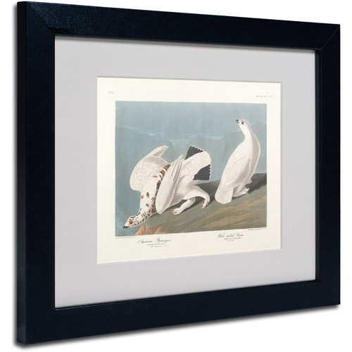 "Trademark Fine Art ""American Ptarmigan"" Canvas Art by John James Audubon, Black Frame"