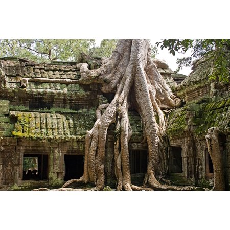 Laminated Poster Angkor Reap Ta Prohm Siem Cambodia Jungle Poster Print 24 x 36