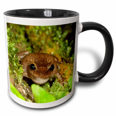3dRose Common coqui frog, El Yunque NF, Puerto Rico-CA27 MPR0000 - Maresa Pryor - Two Tone Black Mug, 11-ounce