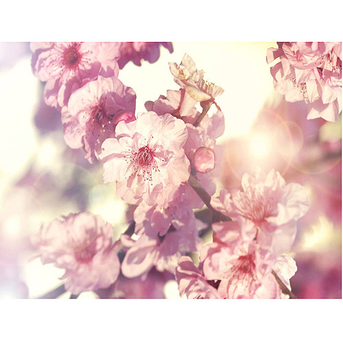 "Trademark Fine Art ""Spring Melody"" Canvas Art by Beata Czyzowska"