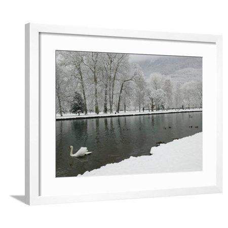 Chateau de Vizille Park, Swan Lake, Vizille, Isere, French Alps, France Framed Print Wall Art By Walter (Swan Lake Black Swan Pas De Deux)