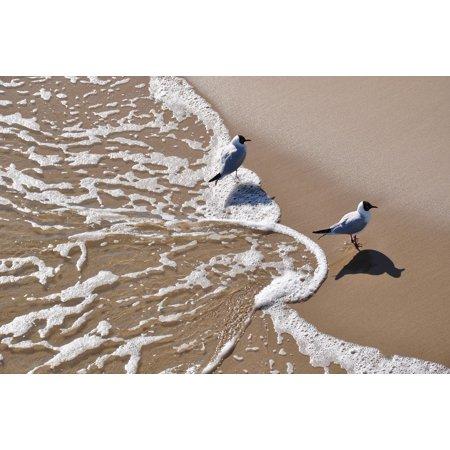 Canvas Print Sand Foam Water Beach Gull Bird Stretched Canvas 10 x 14