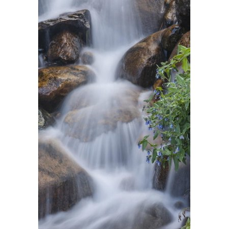 Colorado Cascade - USA, Colorado, Clear Creek County. Close-Up of Cascade and Chiming Bells Flowers Print Wall Art By Jaynes Gallery