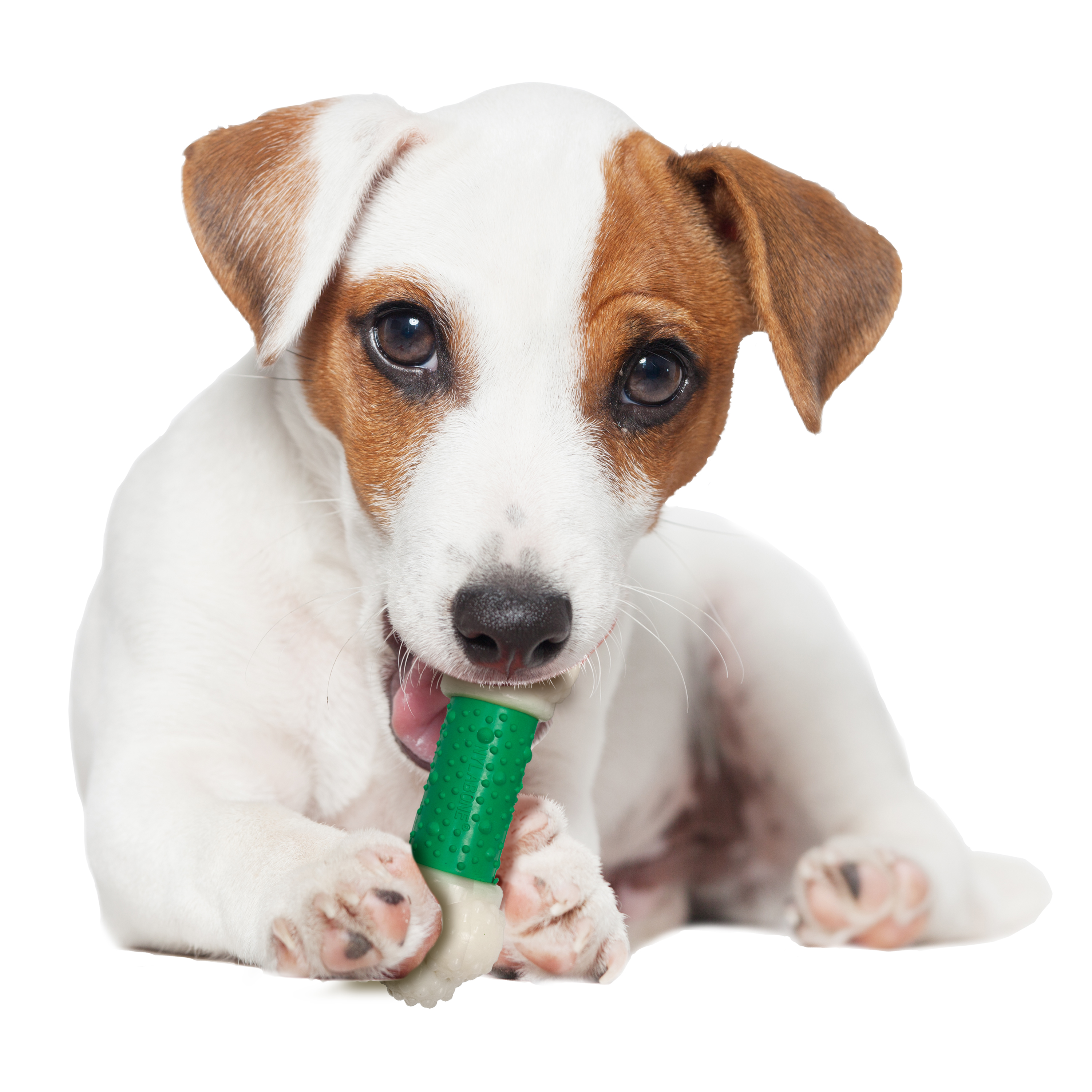 Nylabone Dura Chew Bacon Flavored Double Action Bone Dog Chew Toy, Regular
