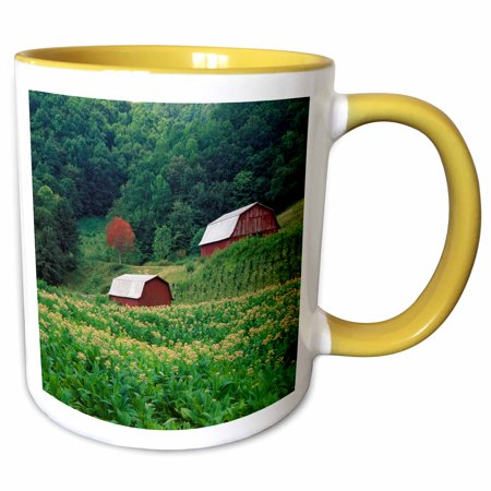 3dRose Tobacco crop and tobacco barns, North Carolina - NA02 AJE0275 - Adam Jones - Two Tone Yellow Mug, 11-ounce