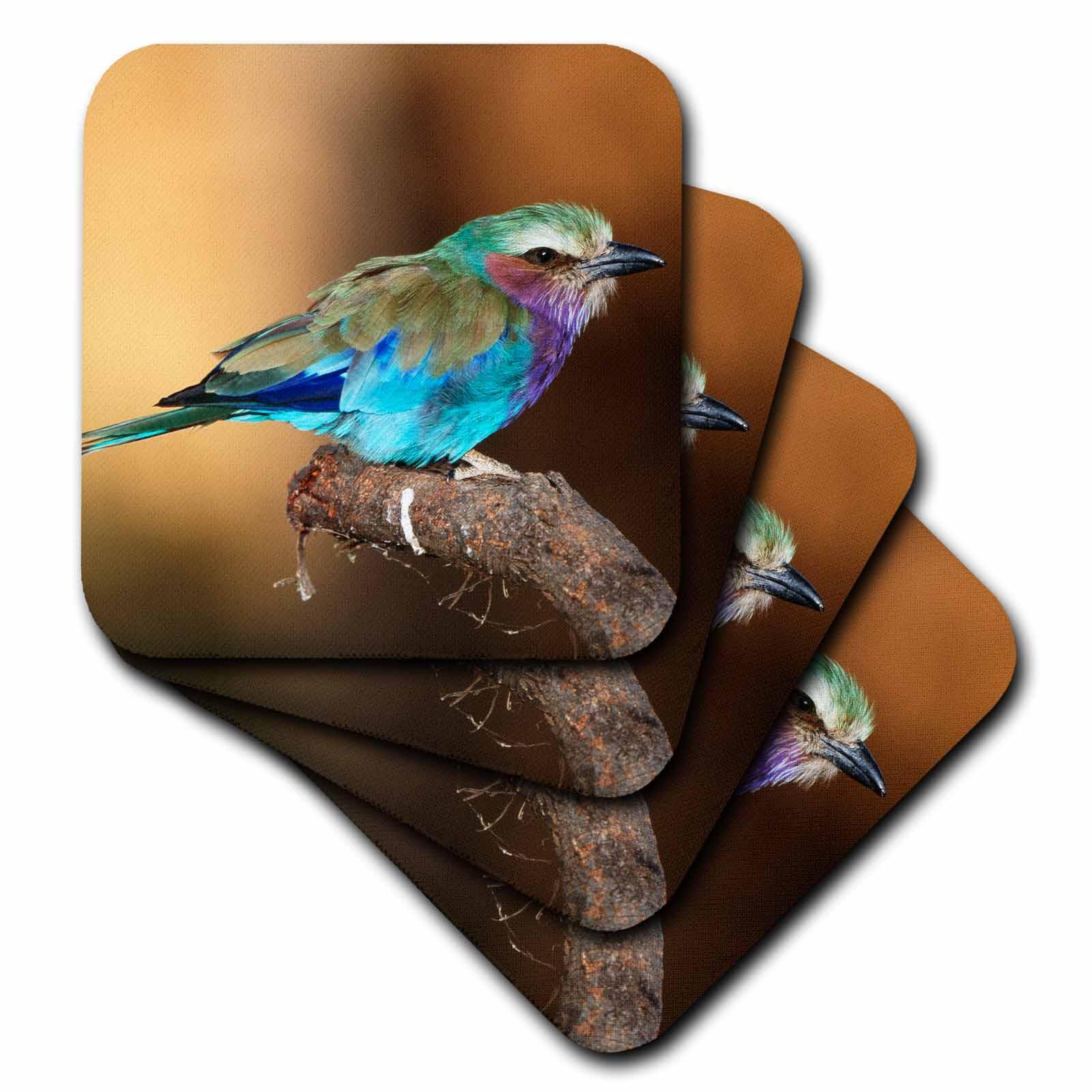 3dRose Kenya, Maasai Mara National Reserve, Lilac-Breasted Roller perching., Ceramic Tile Coasters, set of 4