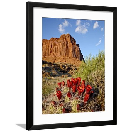 Claretcup Cactus (Echinocereus Triglochidiatus) and Butte, Canyon Country, Utah, USA Framed Print Wall Art By James Hager