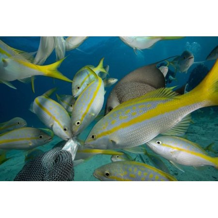 Hand Feeding of Saltwater Fish. Print Wall Art By Stephen Frink