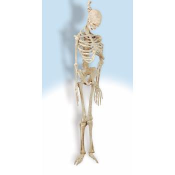 Latex Skeleton 5'](Prop Latex)