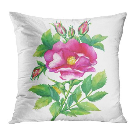 ECCOT Green The Branch Flowering Pink Dog Rose Names Japanese Sweet Briar Eglantine Watercolor Painting Purple Pillow Case Pillow Cover 18x18 inch