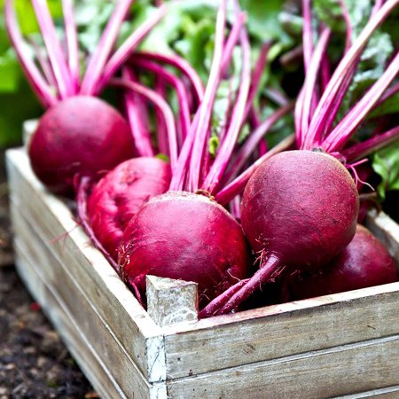 Ruby Queen Beet Seeds - 4 Oz - Non-GMO, Heirloom - Vegetable Garden, Root Crop, Microgreens, Canning, Pickling, Beet Garden Seeds - Ruby Queen.., By Mountain Valley Seed Company Ship from