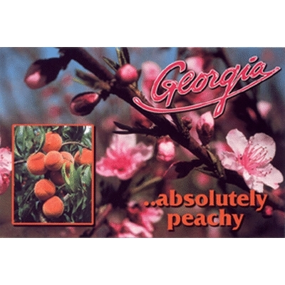 Ddi Georgia Postcard 13151 Absolutely Peachy (pack Of 750)