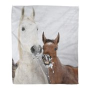 SIDONKU Throw Blanket 50x60 Inches Brown Horse Mare with Foal Looking at You in Winter Snow Equine Pony Batch Warm Flannel Soft Blanket for Couch Sofa Bed