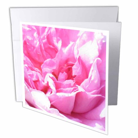 Pink Rose Petals Note Card (3dRose Pink flower petals macro photography Floral closeup photo Pretty rose peony abstract folds - Flowers, Greeting Cards, 6 x 6 inches, set of 12)