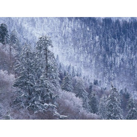 Snowy Trees on Mountain Slope, Morton Overlook, Great Smoky Mountains National Park, Tennessee, USA Print Wall Art By Adam