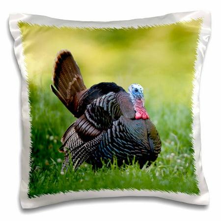 Strutting Gobblers - 3dRose Eastern Wild Turkey gobbler strutting in field, Holmes Co. MS - Pillow Case, 16 by 16-inch