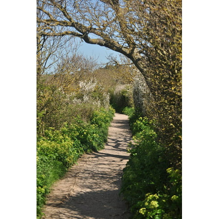 Woodland Shadows (LAMINATED POSTER Woodland Path Forest Trees Shadows Woods Poster Print 24 x 36)