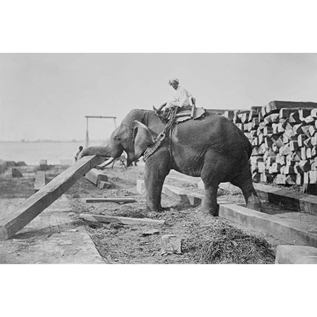 Elephant Moves Huge Logs for Indian Master and stack them in piles Poster Print by unknown