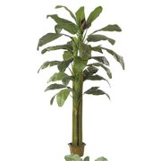 Autograph Foliages P-0661 - 8.5 Foot Banana Palm - Green