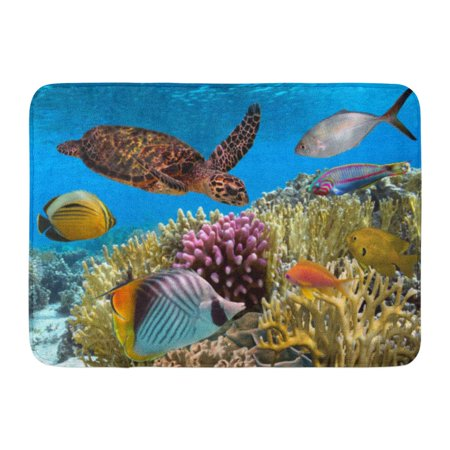 GODPOK Caribbean Animal Green Turtle Swimming in Blue Ocean Red Sea Aqua Color Rug Doormat Bath Mat 23.6x15.7 inch - Caribbean Blue Color