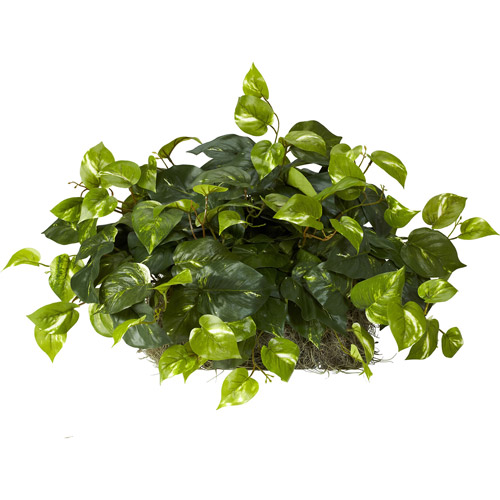 Pothos Ledge Plant Silk Plant on Foam