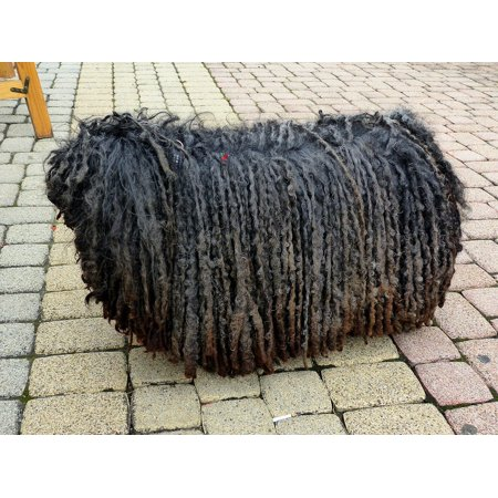 Canvas Print Stool Shaggy are Mop Dog Black Rasta Braids Stretched Canvas 10 x 14 - Shaggy Dogs For Sale