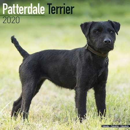 Patterdale Terrier Calendar 2020 - Patterdale Terrier Dog Breed Calendar - Patterdale Terrier Premium Wall Calendar 2020