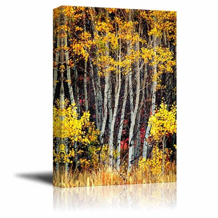 Canvas Prints Wall Art - Detail of Several Aspen Birch Trees with Golden Yellow Leaves - 16