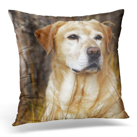 Dog Pillowcase (BPBOP Dogs Yellow Lab in Chocolate Pillowcase Cover 18x18 inch)