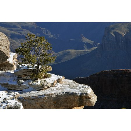 Framed Art For Your Wall Tree Gorge Grand Canyon Arizona Ledge Snow Winter 10x13 Frame