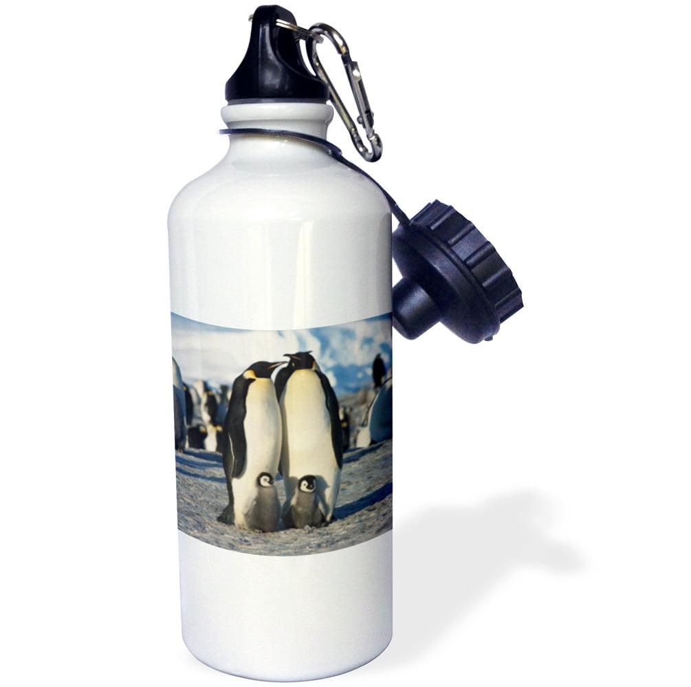 3dRose Antarctica, Herd of Emperor Penguins in winter , Sports Water Bottle, 21oz by Supplier Generic