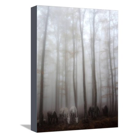 Fog Stretched Canvas Print Wall Art By Francesco - Martini Stretched Canvas