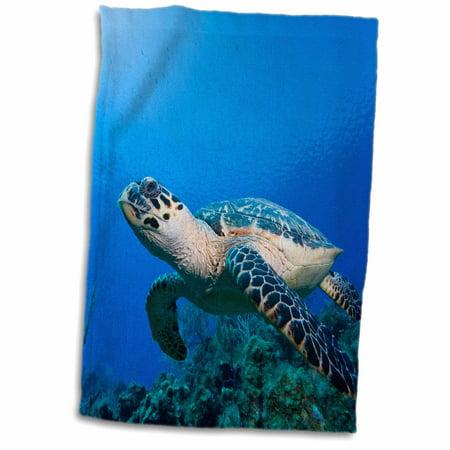 3dRose Cayman Islands, Hawksbill Sea Turtle and coral reef -CA42 PSO0093 - Paul Souders - Towel, 15 by 22-inch - Paul Frank Towel