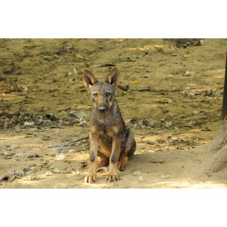 Canvas Print Puppy Wanted Nature Mammal Zoo Wolf Animal World Stretched Canvas 10 x