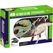 Stegosaurus Dinosaur Anatomy Model