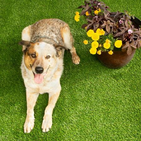 Flooring Inc Pet Turf Plus Rolls 6.5'x4' - Artificial Grass, Pet Turf, Patio Flooring