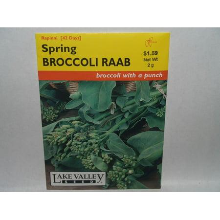 Broccoli Raab Spring