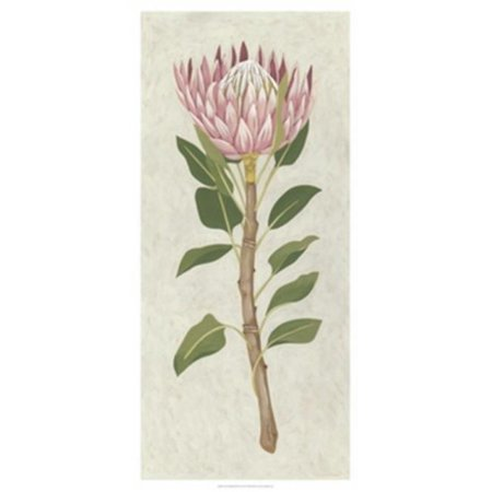 Old World Prints OWP14060GG Non-Embellished Protea II Poster Print by Chariklia Zarris - 20 x 42 - image 1 of 1