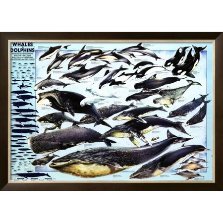 Whales and Dolphins Framed Poster Wall Art  - 42.5x30.5 20 X 65 Dolphins
