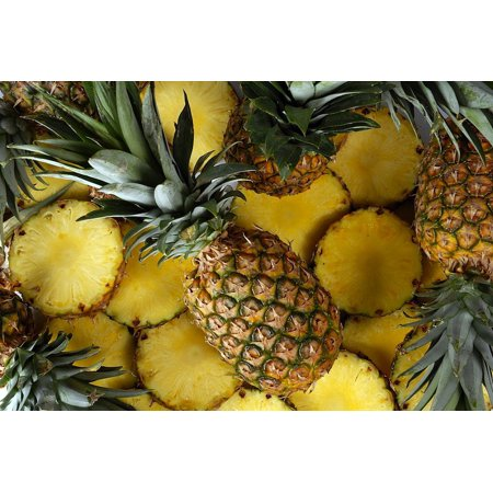 "Florida Special Pineapple Plant - Ananas - Great Indoors/Out - 4"" Pot"