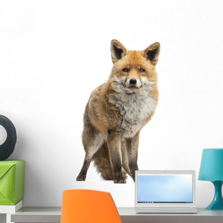 Red Fox Vulpes Vulpes Wall Decal by Wallmonkeys Peel and Stick Graphic