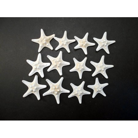Nautical Craft Supplies (Set of 12 White Knobby Starfish for Beach Wedding Crafts and Decor 2-3